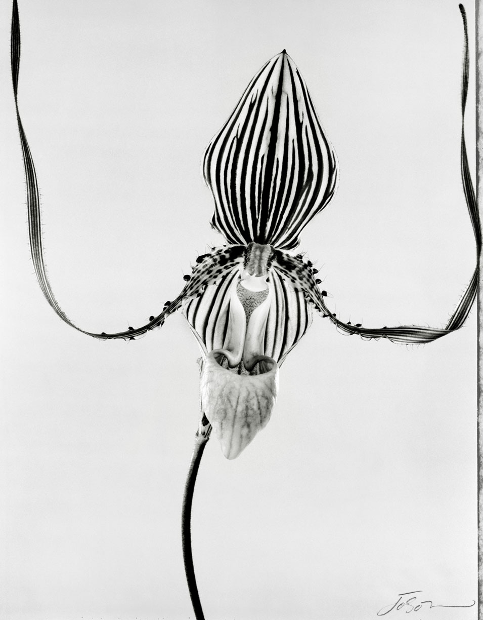 Orchid by joSon shot on Polaroid type 55  film