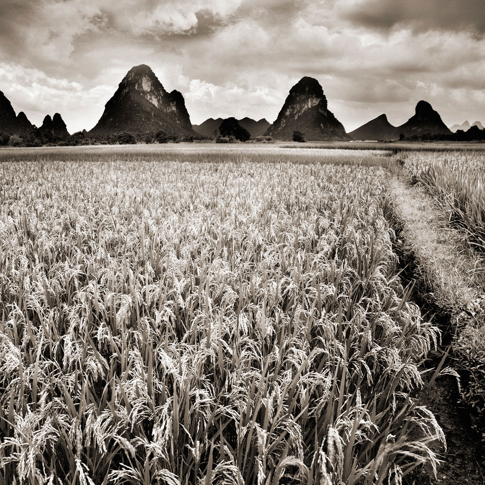 Rice Fields and Mountant, Guilin, China
